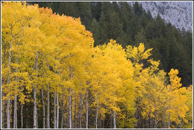 Autumn in the Rocky Mountains 3