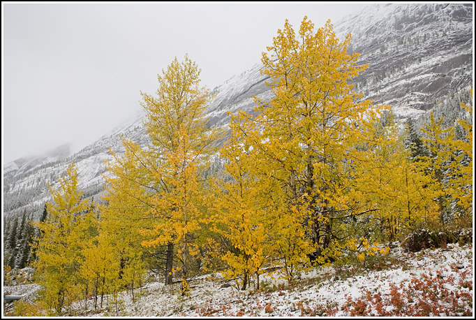Autumn in the Rocky Mountains 5
